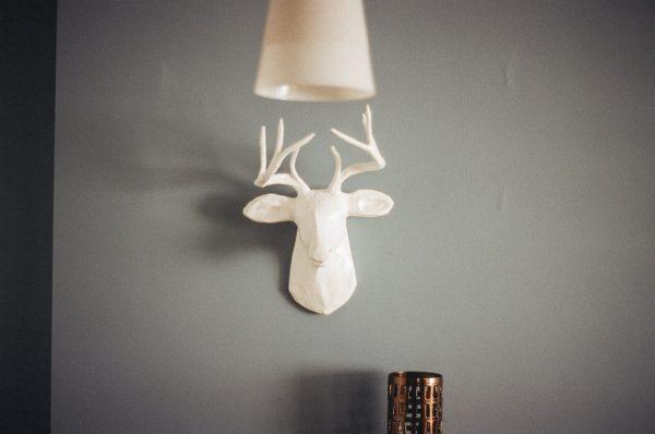 wall-home-deer